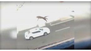 Una joven tira a un gato de un tercer piso