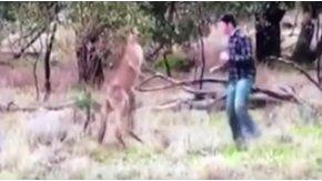 Se peleó con un canguro para defender a su perro