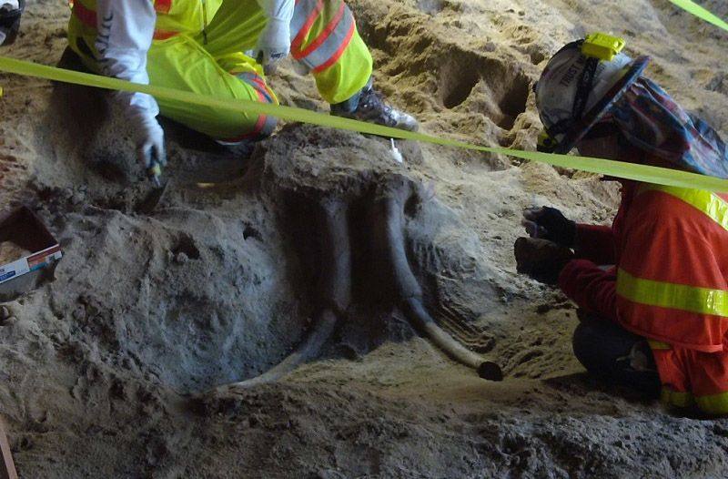Encontraron dos cráneos de mamut