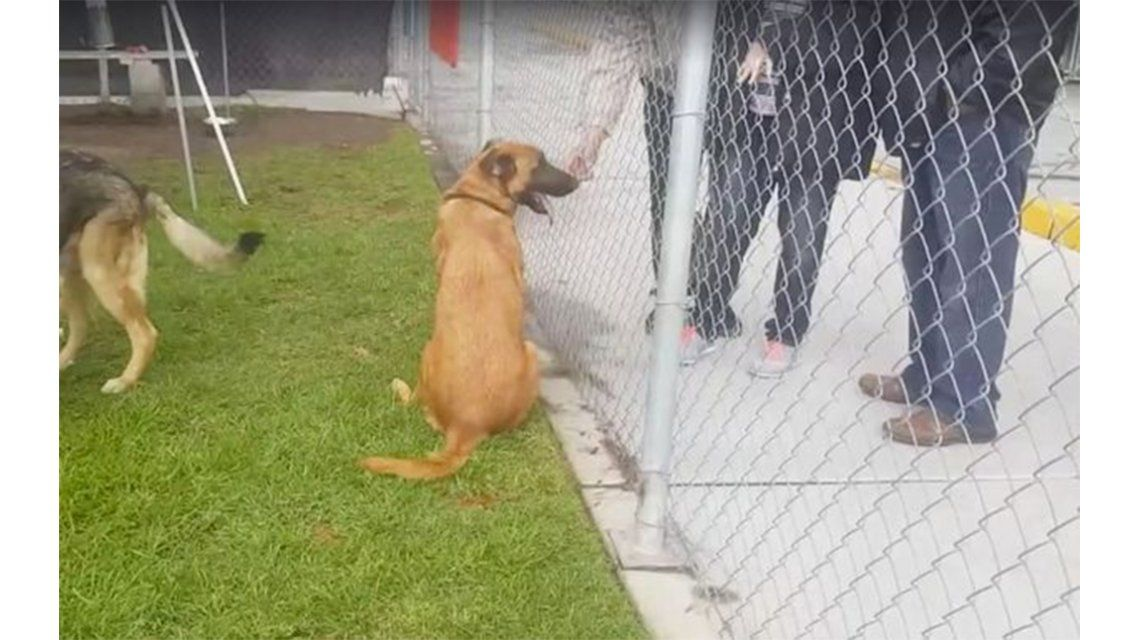 Una perra pensó que su familia venía a buscarla pero se llevaron a otro perro