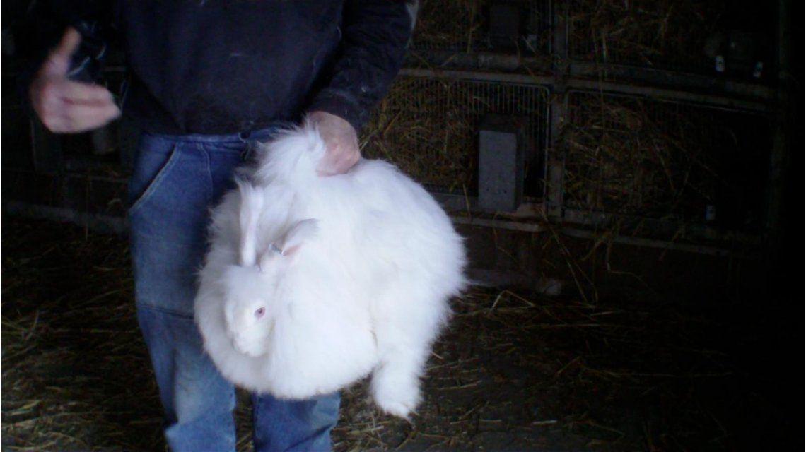 Maduro sugirió criar conejos y comerlos en puchero