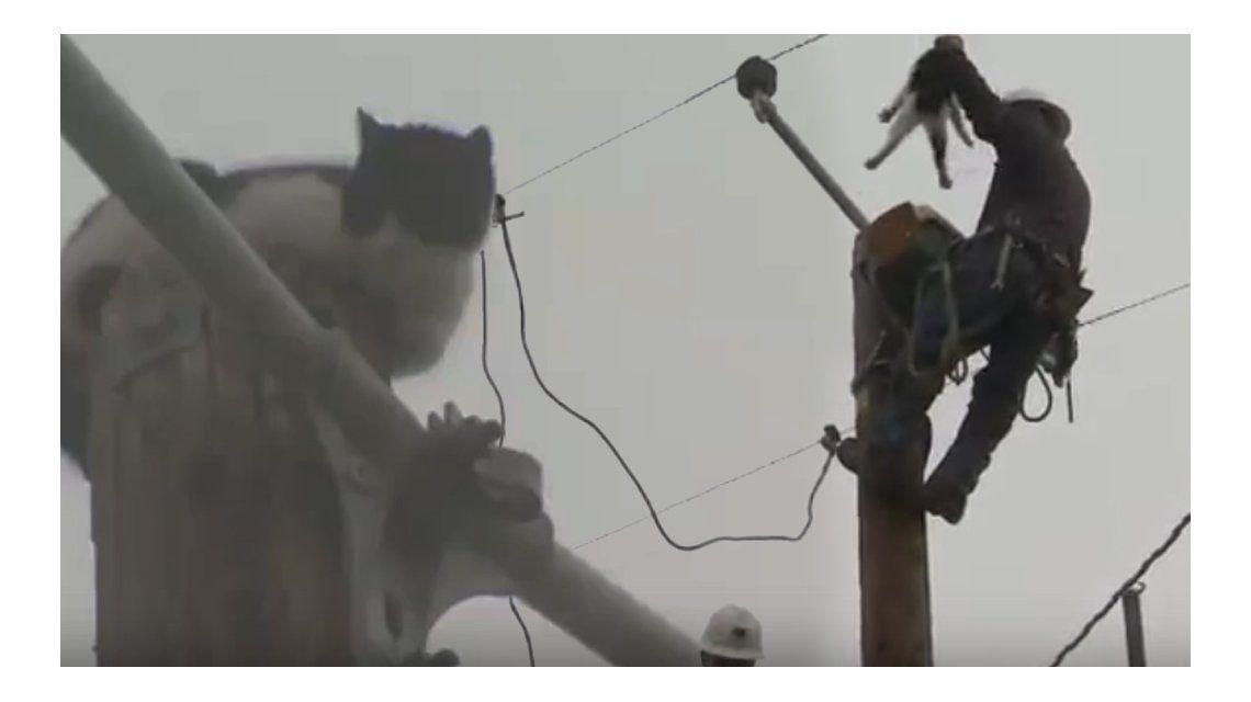 Rescataron a un gato que pasó nueve días atrapado en un poste de luz