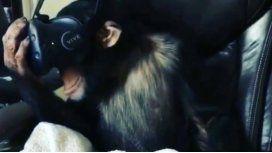 La reacción del mono fue muy efusiva