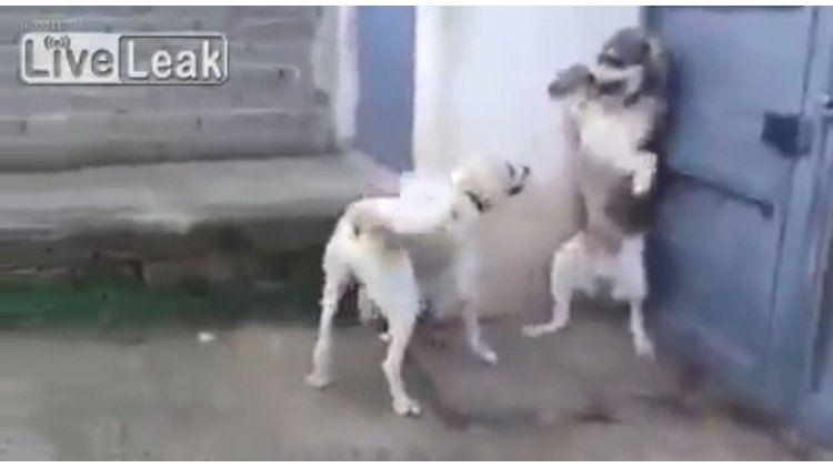 Un perro estaba en una esquina y cuando dos cachorros se le acercaron les  ladró. Instantáneamente se arrepintió 545018ade57