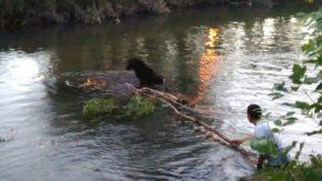 Rescataron a una perra de un arroyo - Crédito: La Mañana de Neuquén