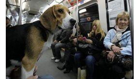 En los metros de Londres, Barcelona y Madrid ya se puede viajar con mascotas e incluso en horas pico