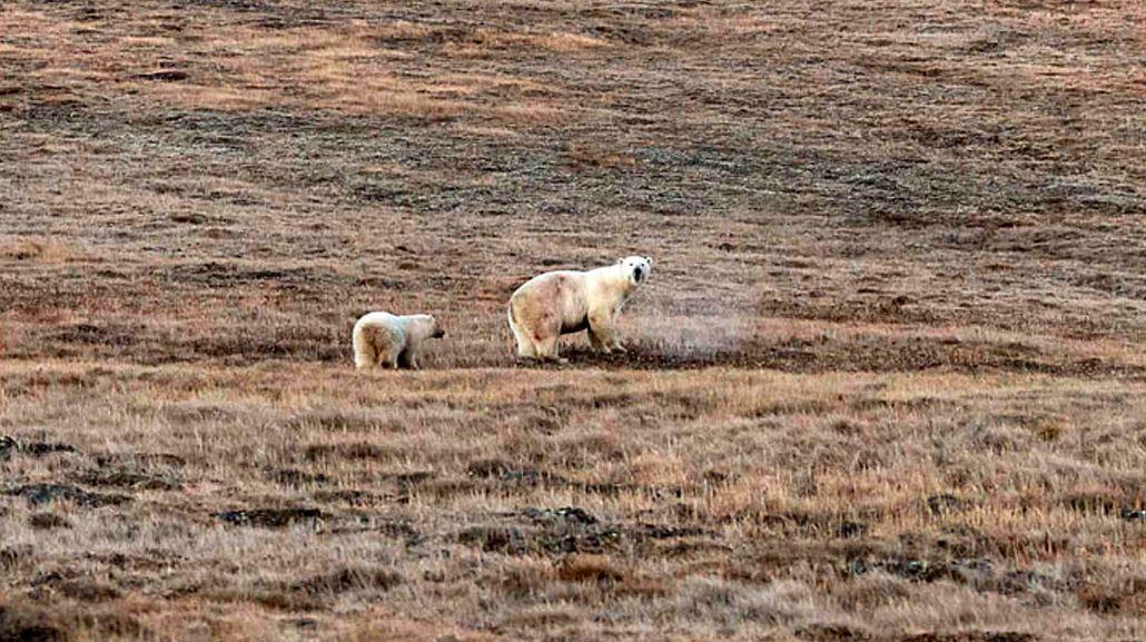 El oso se recupera junto a su madre