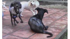 Perros refugio Las Renatas. Captura de pantalla