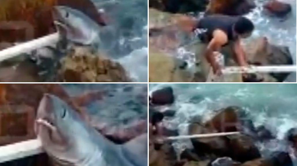 Un tiburón asustó a todos en la escollera de Mar del Plata
