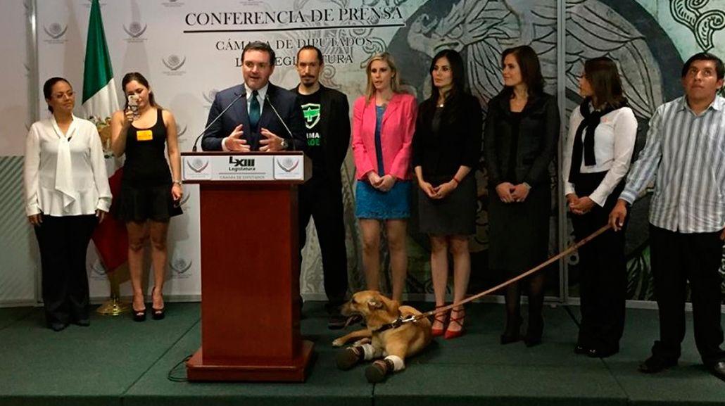 El perro es protagonista de una campaña contra el maltrato animal