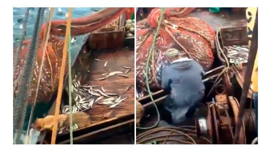Tremenda sorpresa se llevaron los pescadores al descargar la red