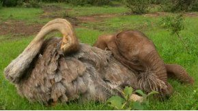 Pea se siente parte de la manada y cuida a los cachorros