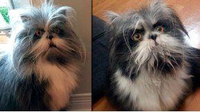 La imagen de un animal llenó de dudas a los usuarios en Twitter.