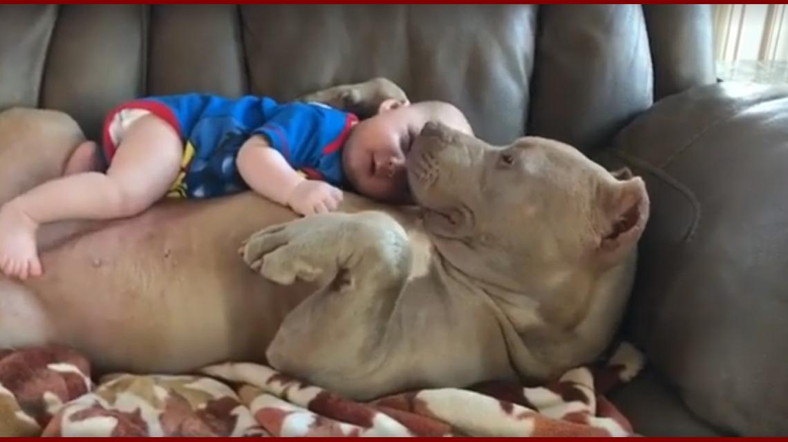 El bebé está recostado sobre la panza de su perro