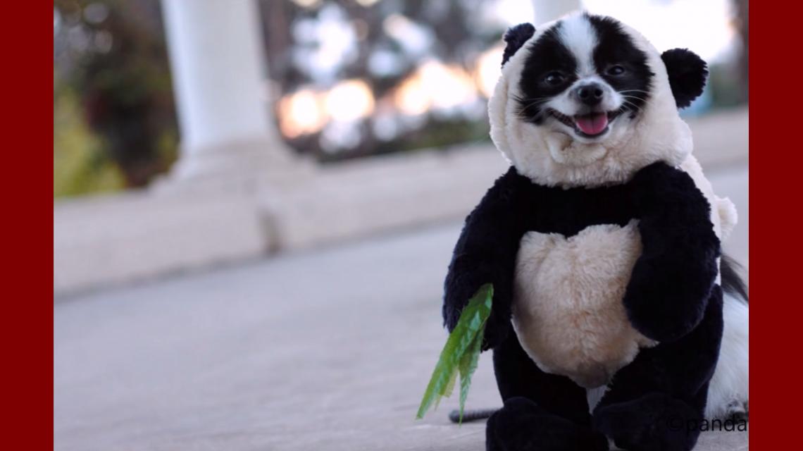 El perro panda que es furor en Facebook