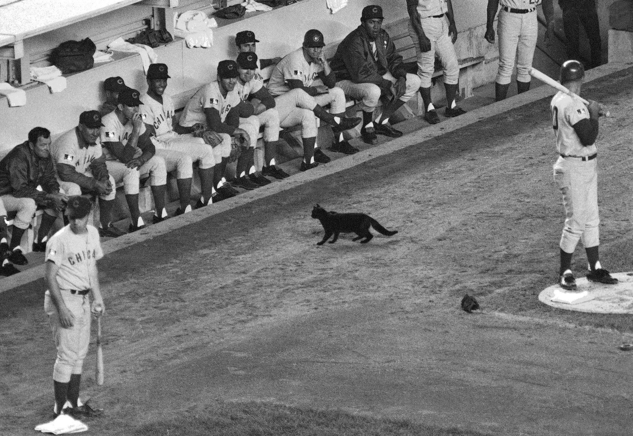 El gato negro de la maldición de los Chicago Cubs