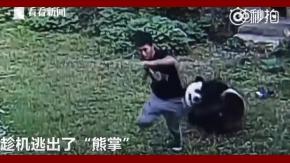 Ocurrió en un zoológico de China, luego de que el hombre se metiera a la fuerza en la jaula del animal