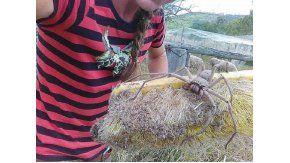 Una araña gigante sorprendió en Australia - Crédito:9 News Perth