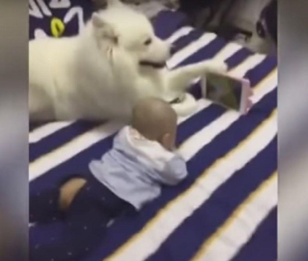 Un perro le tiene la tablet a un bebé para que mire los dibujitos