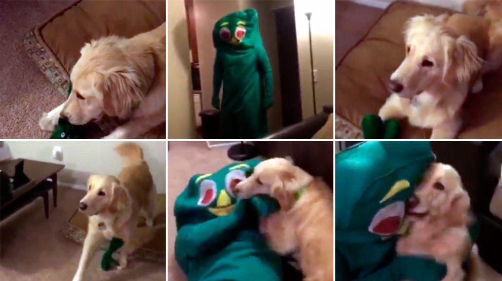 Un perro enloqueció al ver a su dueño disfrazado como su juguete favorito