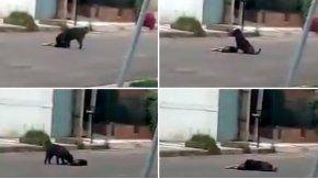 Un perro se queda al lado de su amigo atropellado en Córdoba