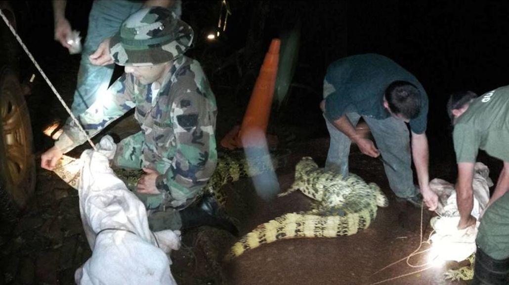 Un yacaré apareció en el hall de un hotel en Puerto Iguazú.