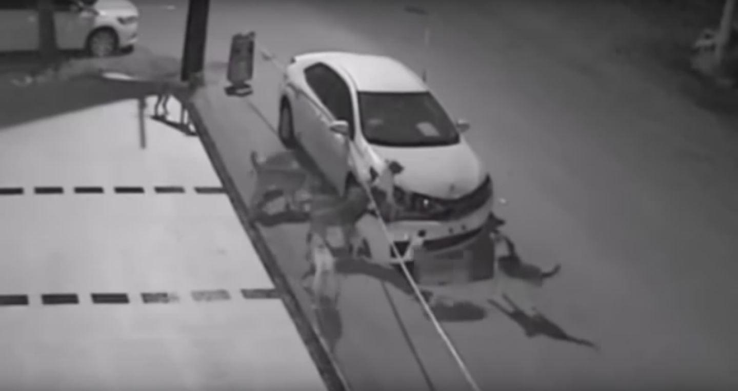 Una jauría de perros destroza un auto
