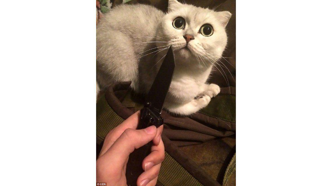 Este gatito está apunto de ser acuchillado