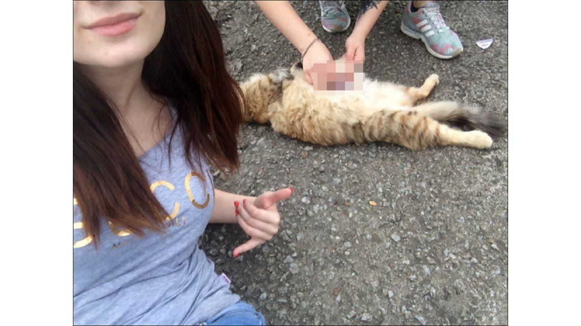 A este gatito le están por arrancar el corazón