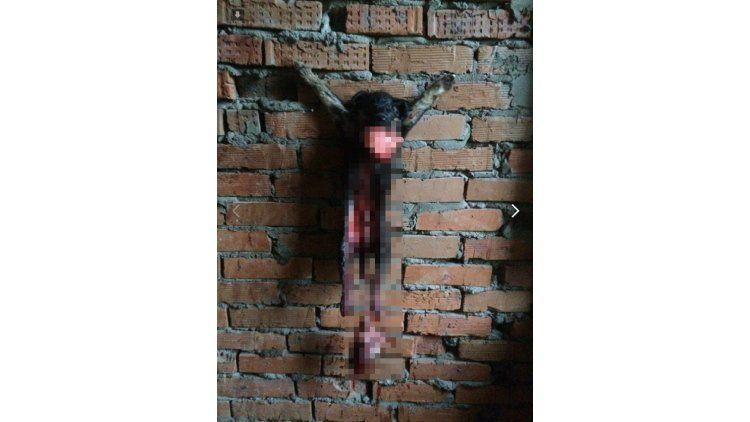 Aberrante crucifixión de un cachorrito