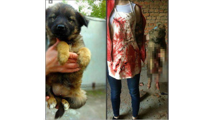 El nefasto antes y después de un cachorrito asesinado por la adolescente rusa