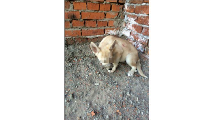 Un cachorrito a punto de ser torturado