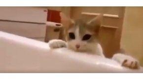 Un gato intenta rescatar de la bañera a su dueña
