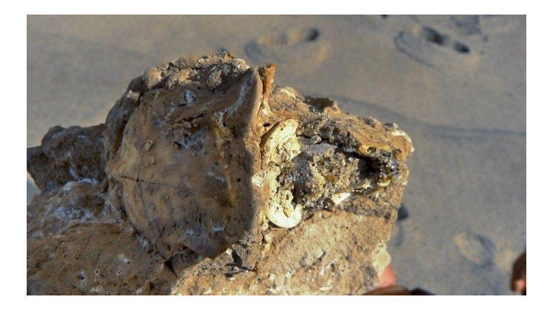Los restos fósiles fueron encontrados por vecinos del barrio Playa Chapadmalal