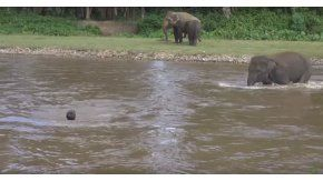 Un elefante corre a ayudar a un hombre que se ahogaba
