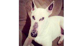 La foto del perro con la cara tatuada que generó indinación en Facebook.