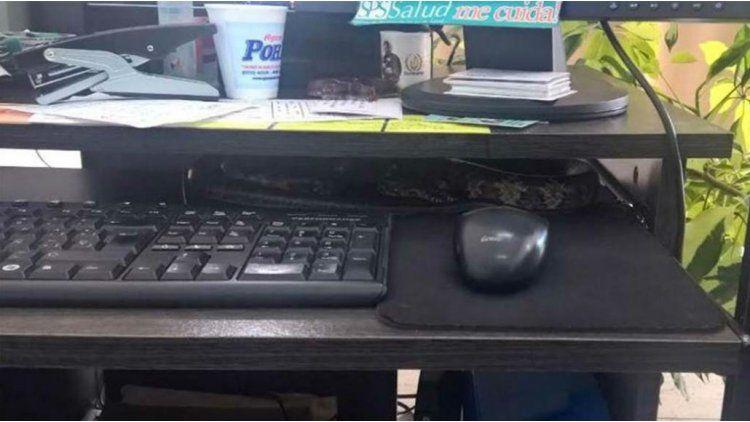 Una empleada encontró una víbora en su escritorio.