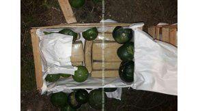 Hallan droga en cajas de Zapallitos. Foto de Gendarmería Nacional