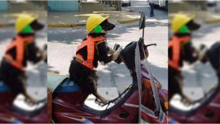 El perro viaja con casco