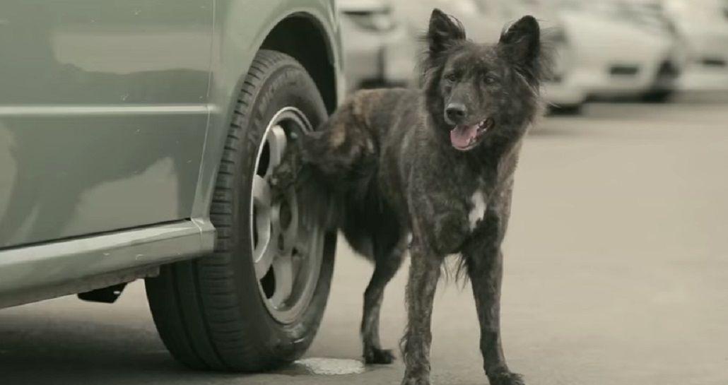 Fin de un misterio: enterate por qué los perros hacen pis en las ruedas de los autos