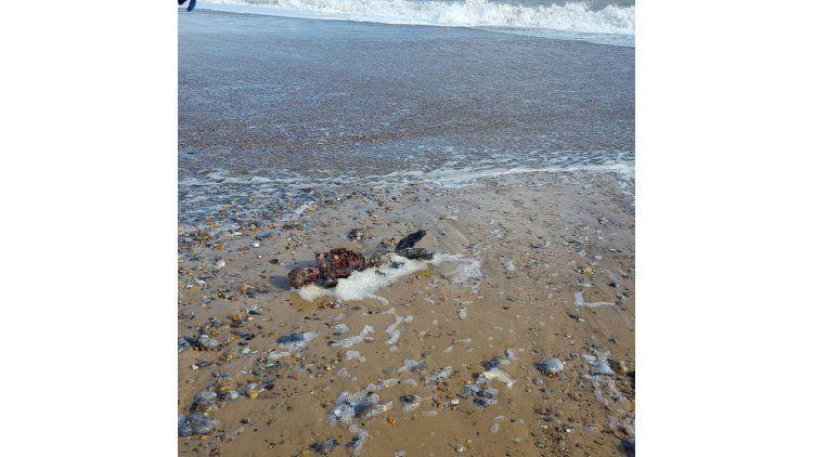 La extraña criatura hallada en la playa.
