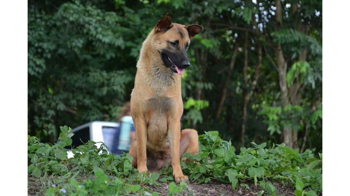 Una perra que esperó a sus dueños al lado de la ruta un año fue atropellada