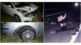 Animales sueltos casi causan una tragedia en la Autovía 2