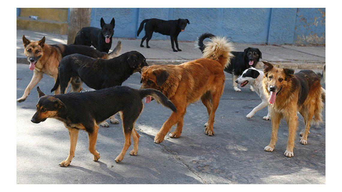 Más de 50 perros y gatos fueron envenenados con herbicida en Esquel