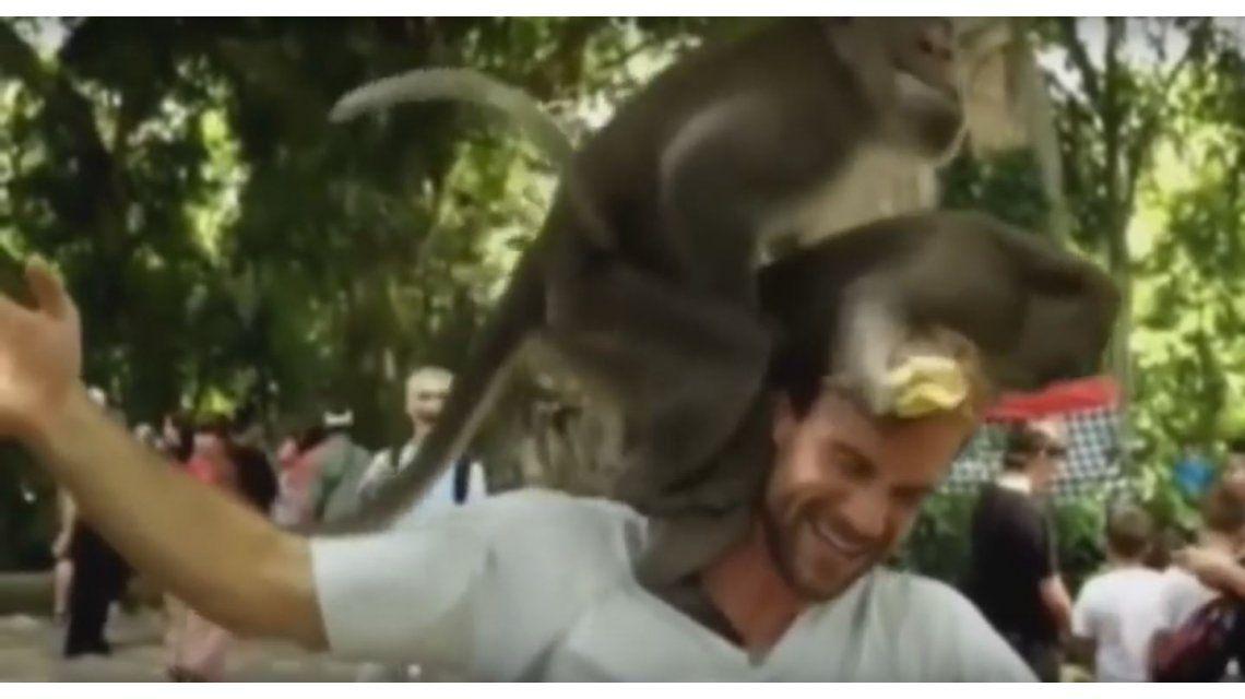 VIDEO: Dos monos tienen sexo sobre la cabeza de un turista