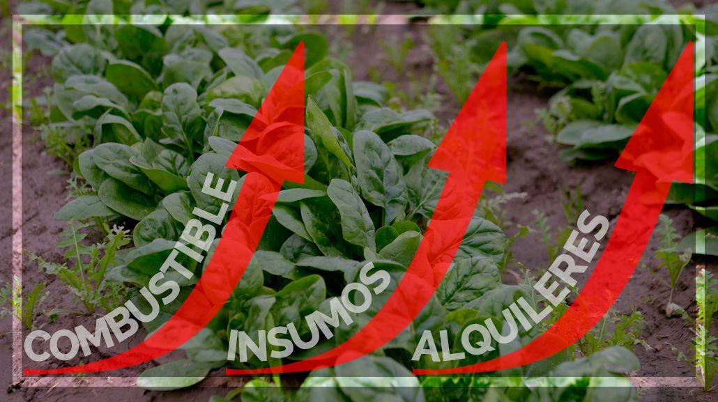 #Verdurazo y crisis: cuáles son los gastos mensuales de un productor