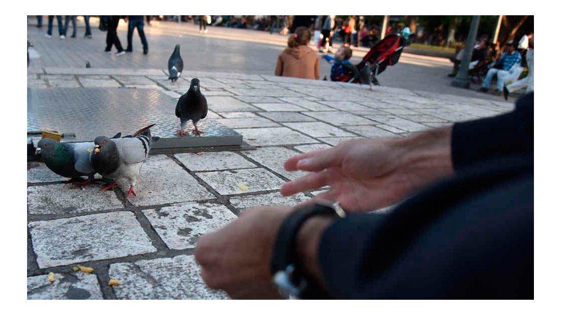 ¿El fin de las palomas? Buscan controlar la superpoblación con anticonceptivos