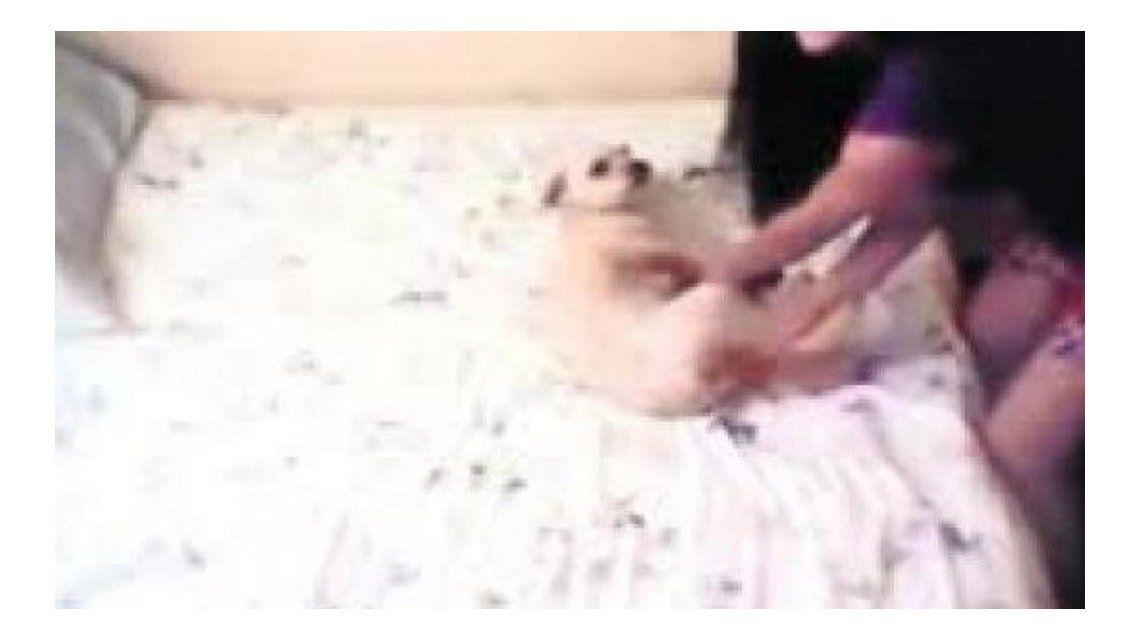 Maltrata a su perro revoleándolo por el aire