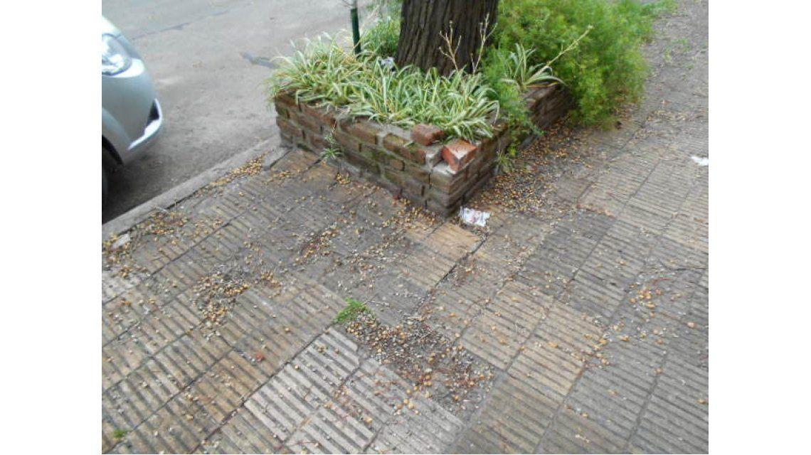 Un vecino debe pagar más de 35 mil pesos porque un nene se tropezó en su vereda