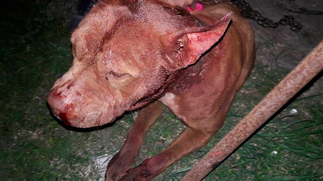 Una perra se metió en la casa de un vecino y le cortaron la cabeza